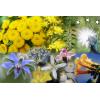 Капки по избор-Холандски цветя